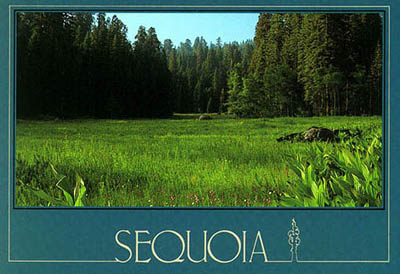 Discribed as 'Jewel of the Sierra' by John Muir the Great Naturalist  - 'CRESCENT MEADOW' in Sequoia National Park